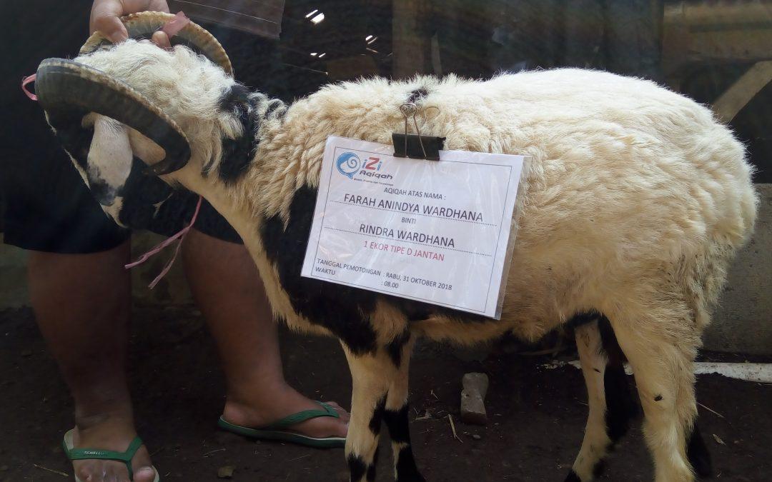 Daging Domba dan Kambing, Penyebab Darah Tinggi dan Kolesterol?
